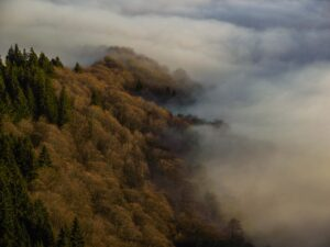 Foggy day in the Carpathians